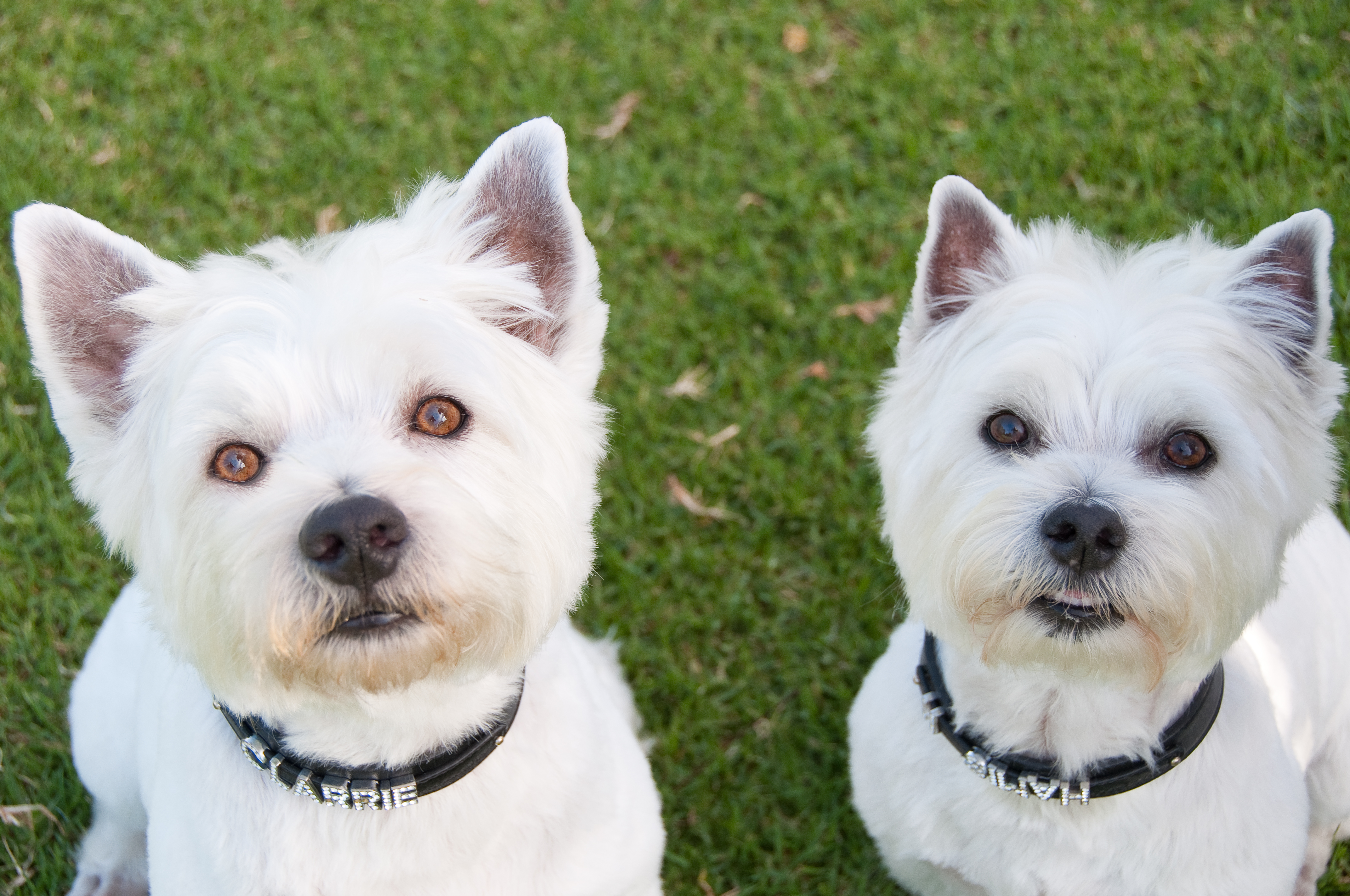 Dr. Chur-Hansen's own two boys: Hamish and Clarrie
