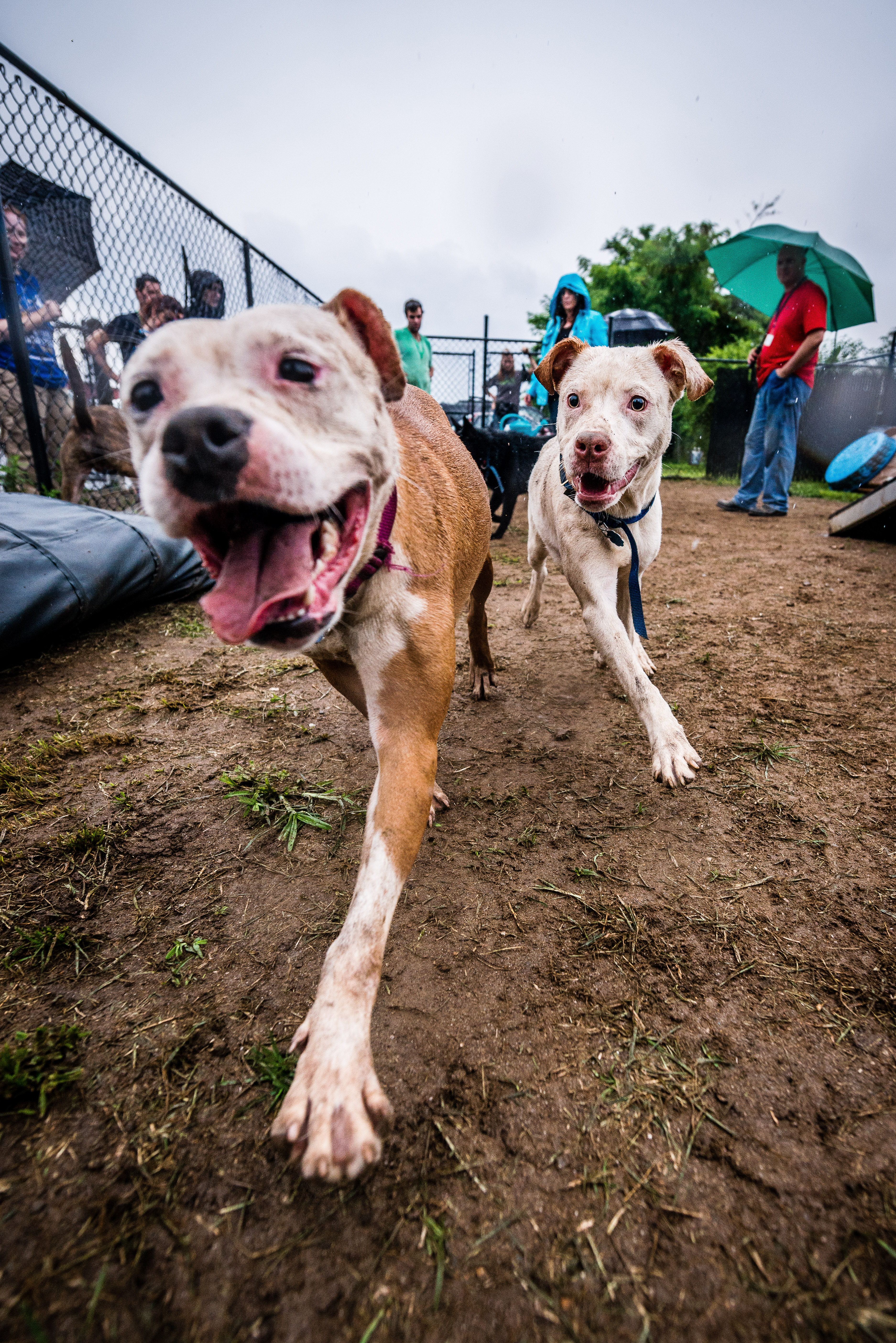 A pair of dogs from a selection day for a prison dog program. Image credit below.