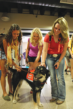 OSU students enjoy time spent with a therapy dog on campus