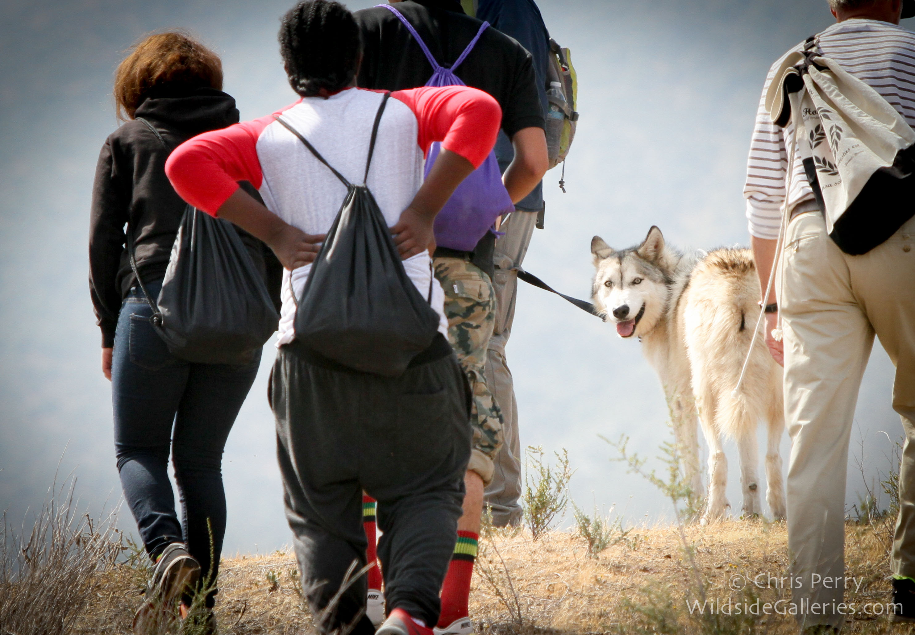 Wolfdog Ryder joins participants on a hike.
