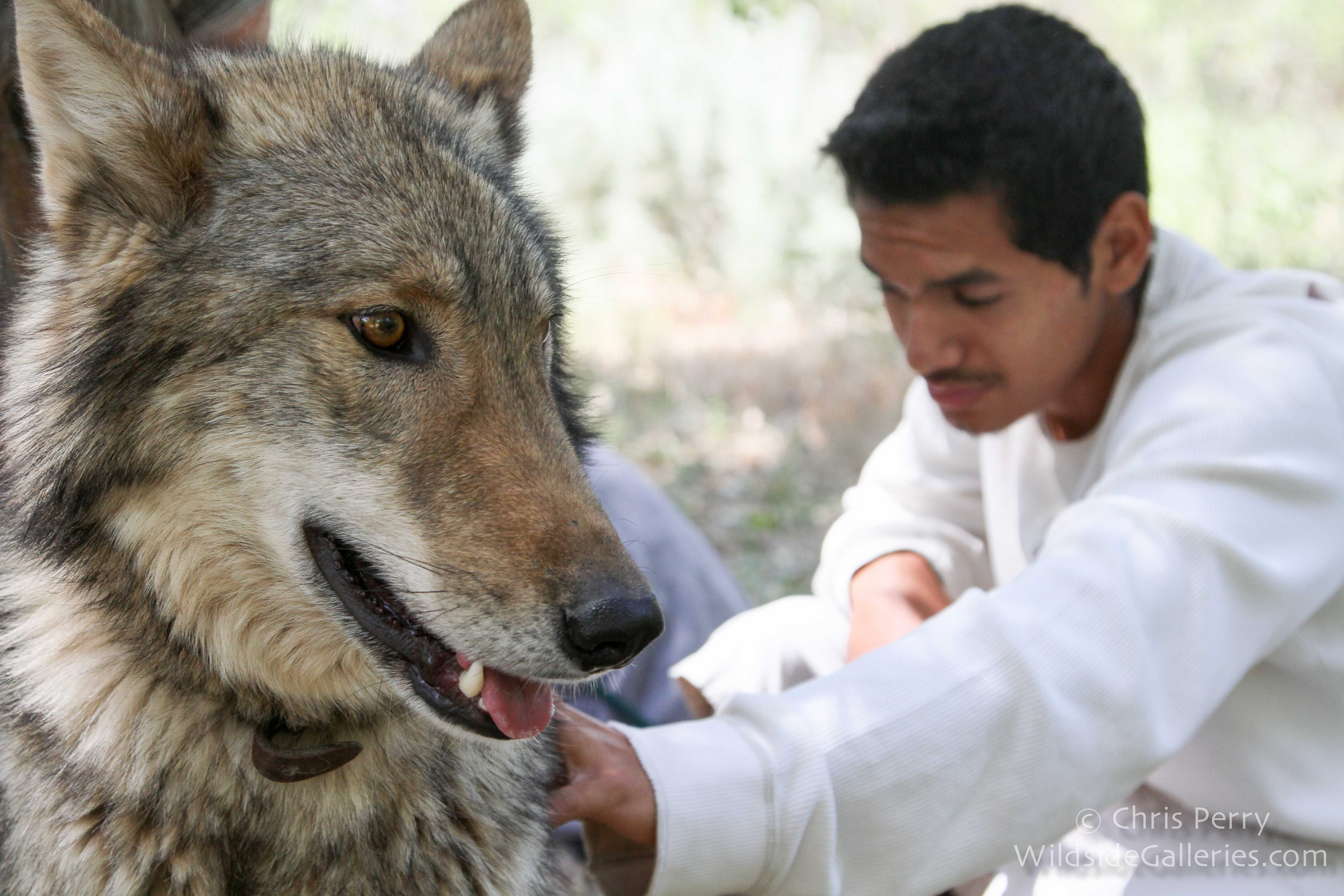 Participants experience a special connection with the wolfdogs.