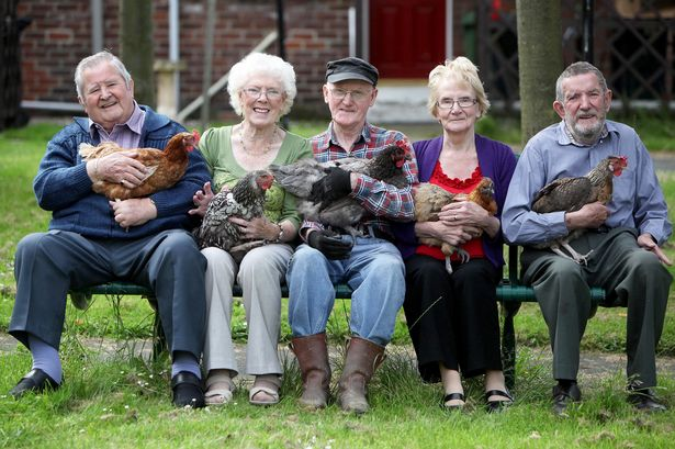 Elderly residents benefit greatly from interactions with both the chickens and people