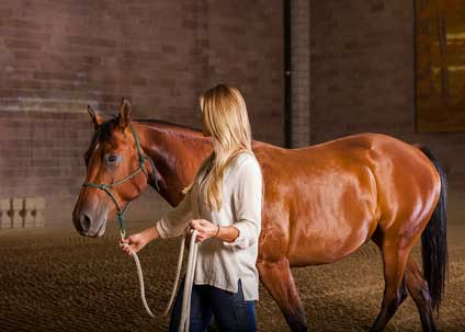 Interactions with horses help people learn about themselves.